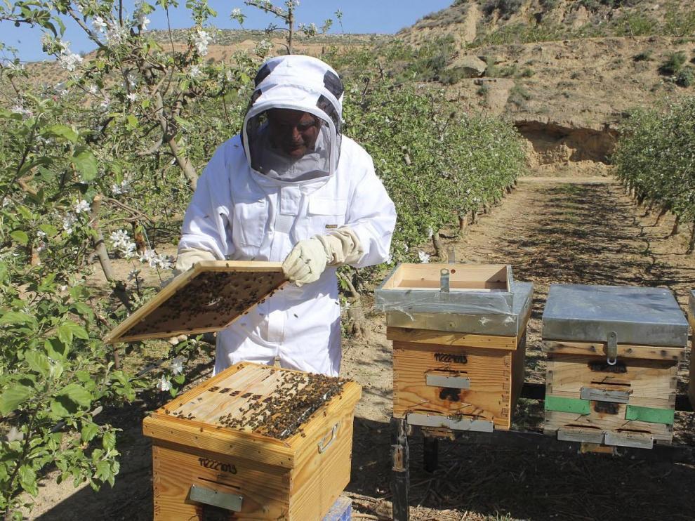La apicultura aragonesa vive un 'boom' desde 2012