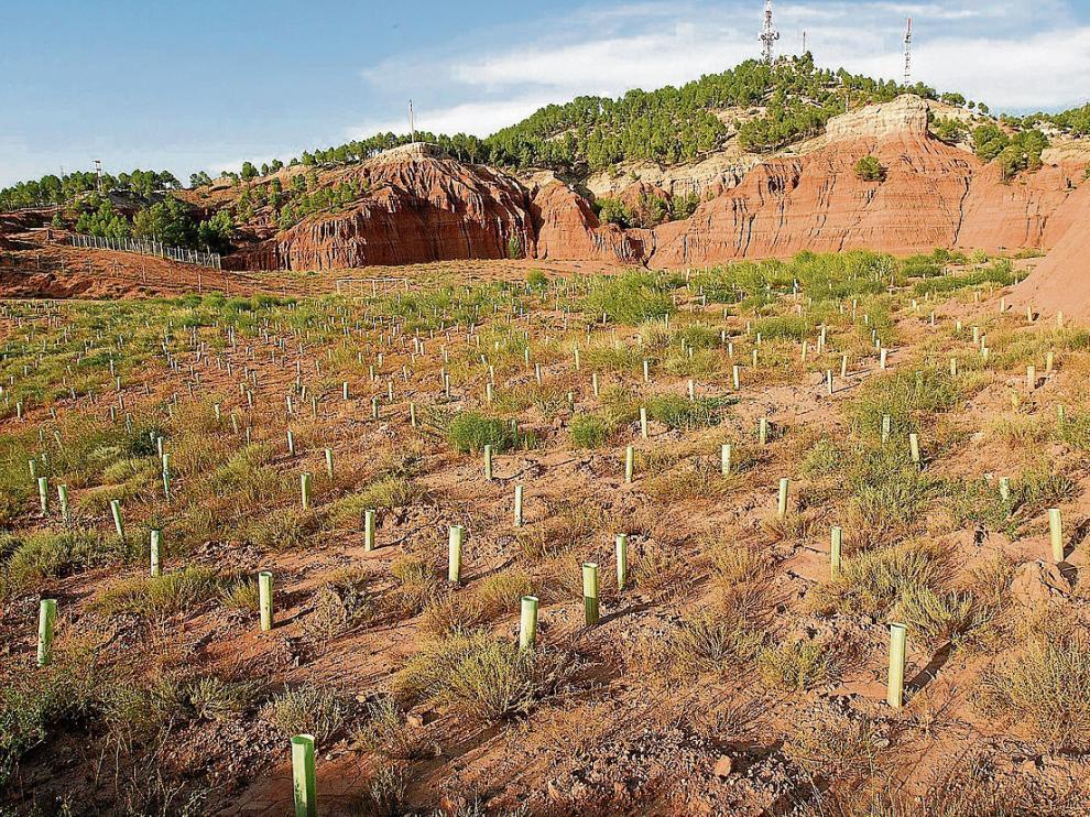 Plantación de arbolado acometida dentro del Life + en el entorno de antiguas canteras de arcilla.