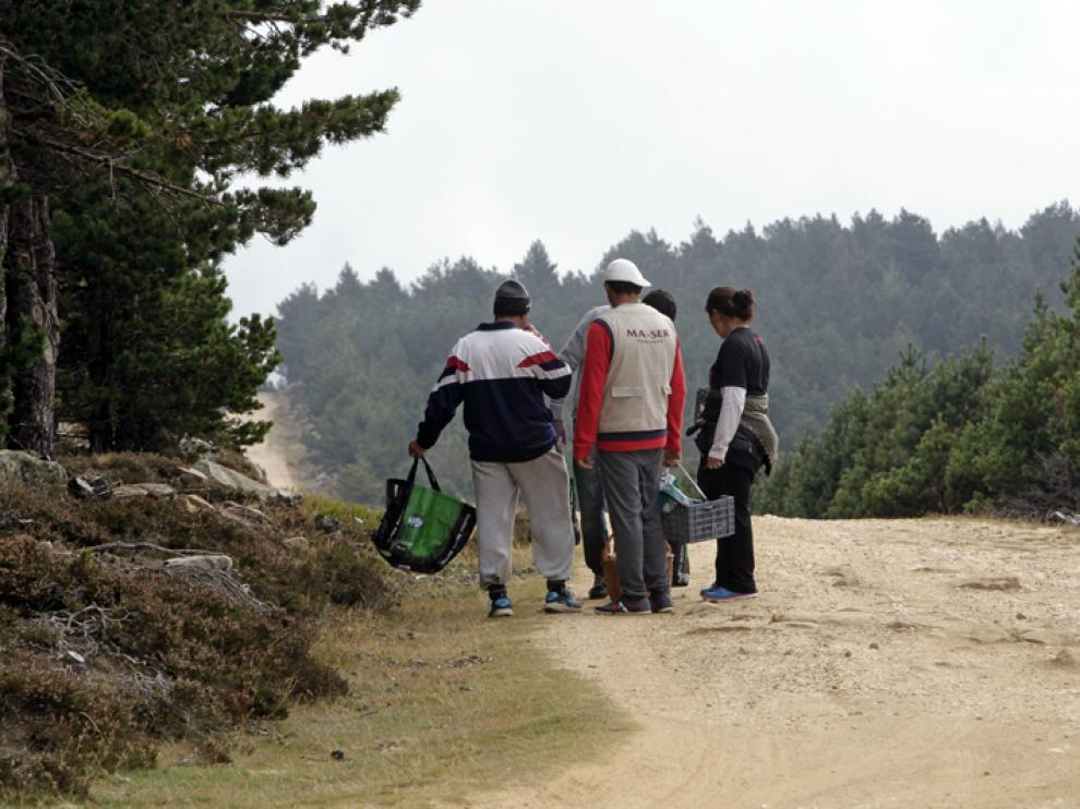 Los recolectores rumanos llevan ya unas semanas yendo de un municipio a otro en los montes de la provincia.