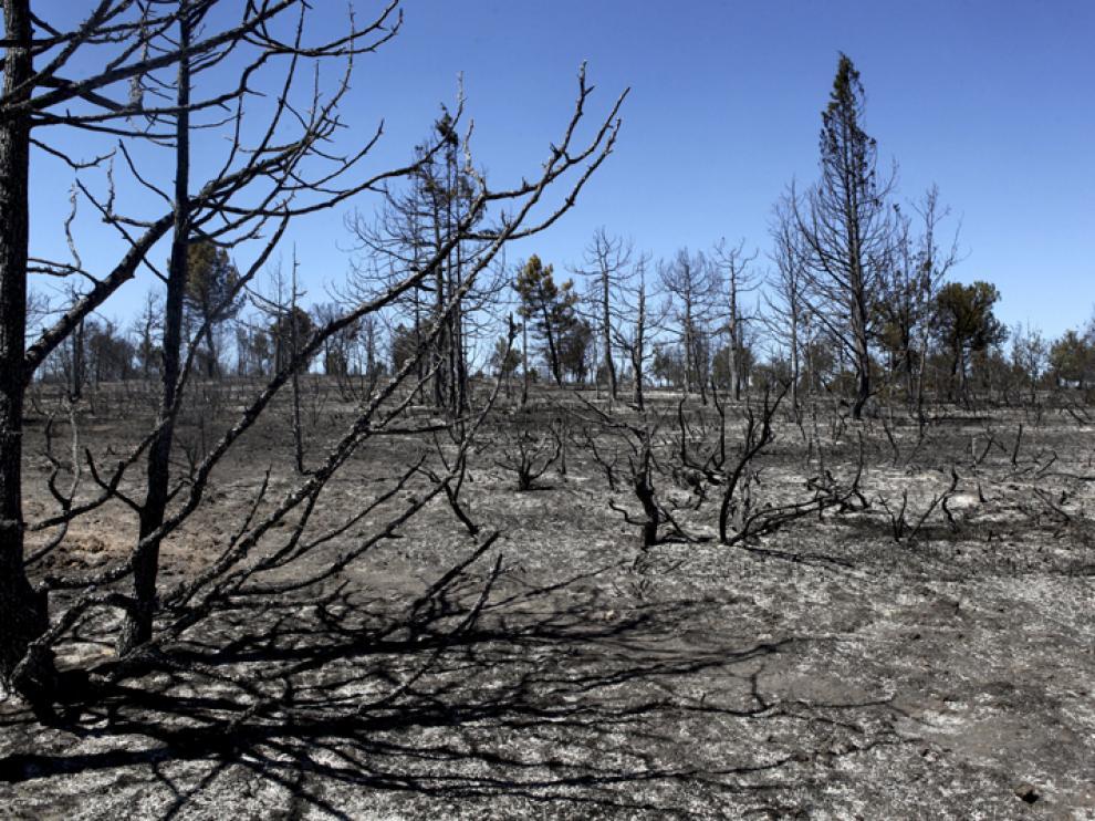 Estado en el que quedó una de las zonas arrasadas por el fuego en Barcebalejo.