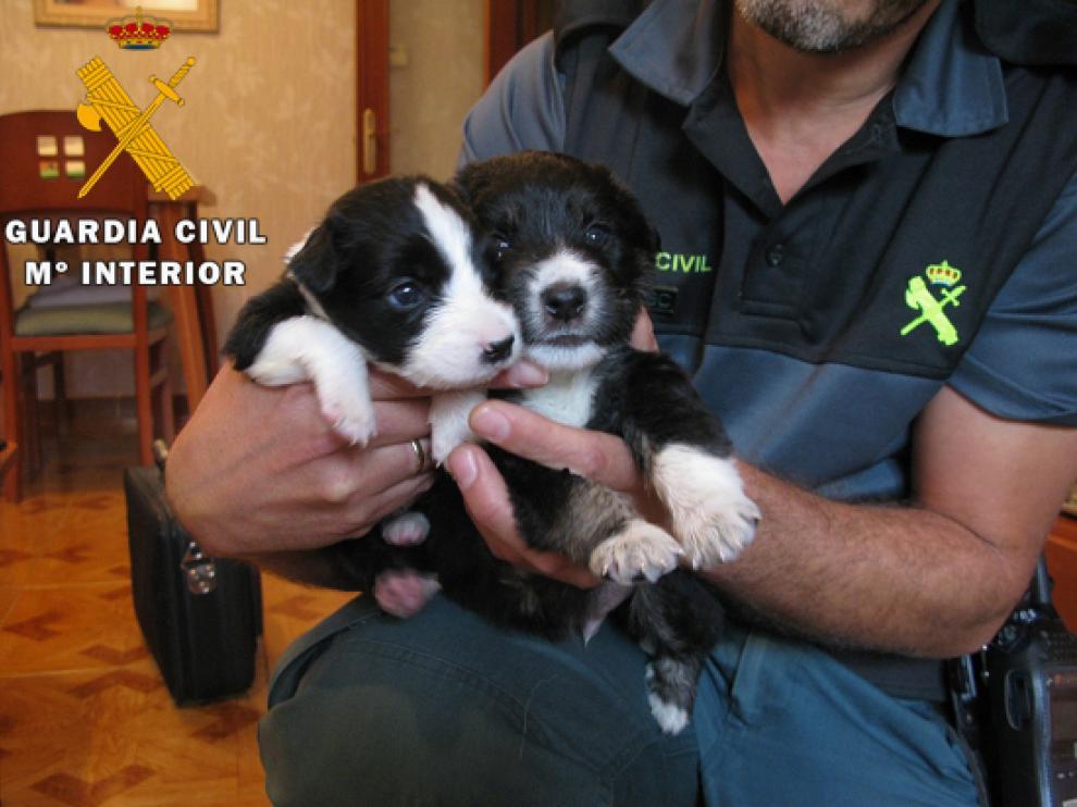 Los cachorros rescatados de los contenedores