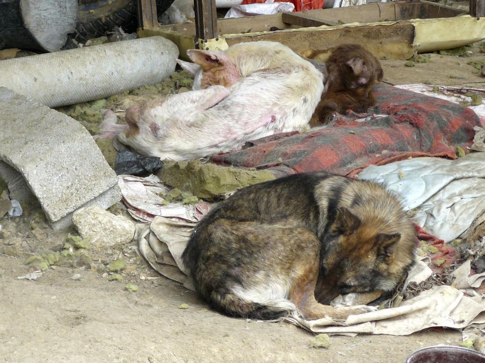 Varios perros víctimas del maltrato