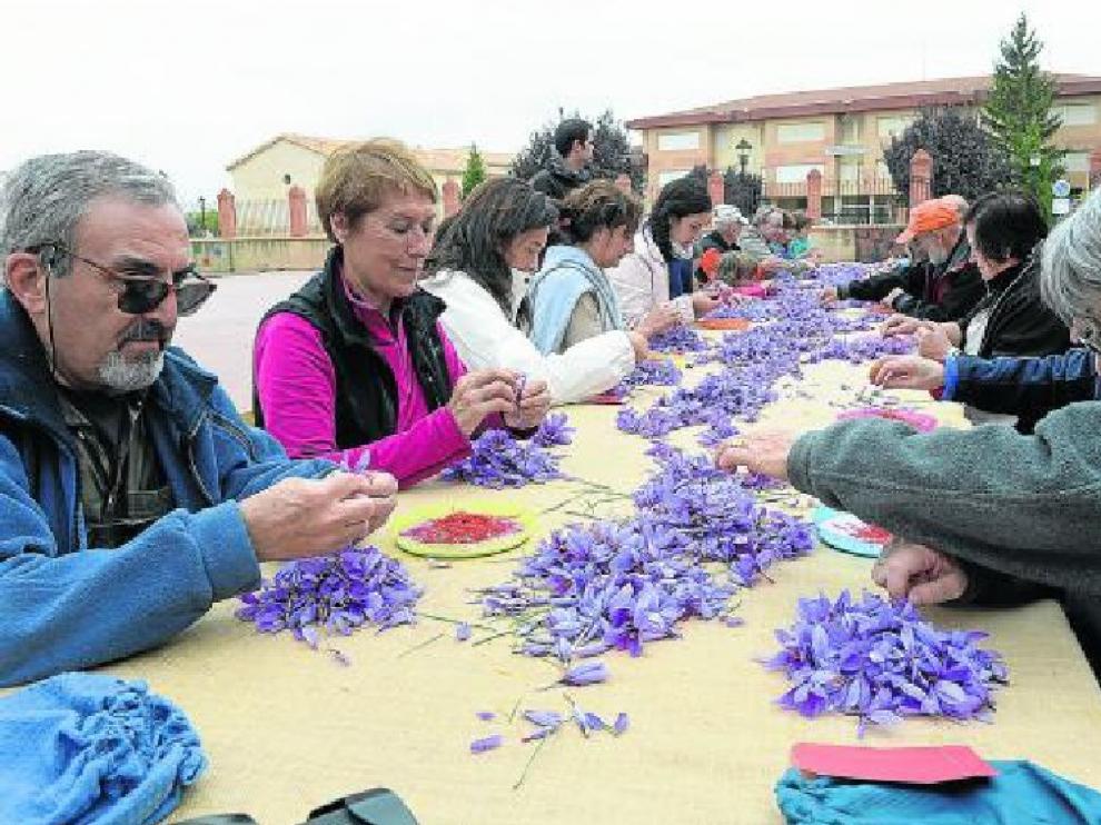 Un grupo de personas se afanaban ayer en esbriznar el azafrán (separar el estigma de la flor).