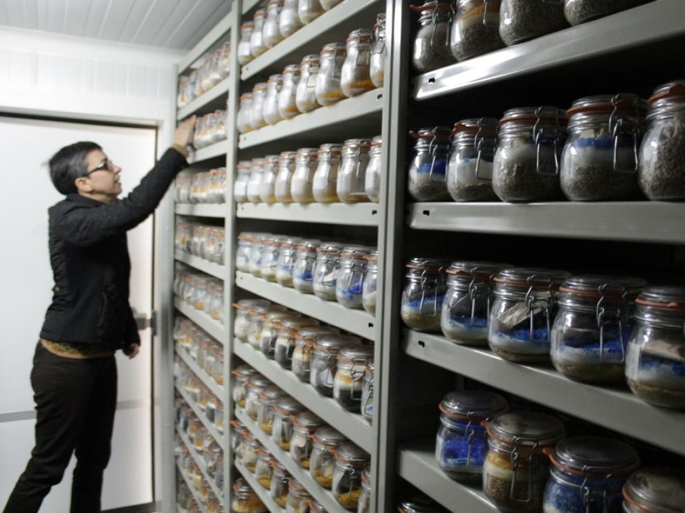 El banco de semillas de Aragón.