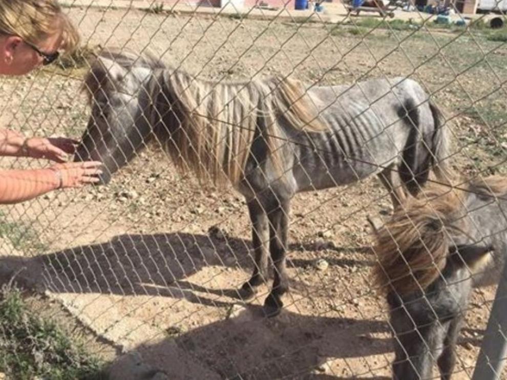 Los animales encontrados en Cartagena