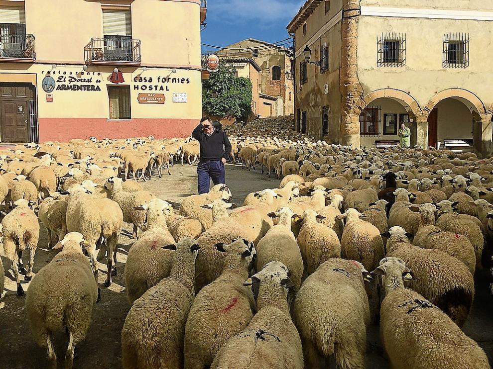 Las ovejas tomaron la plaza de Selgua (Monzón) en su camino hacia San Juan de Flumen.