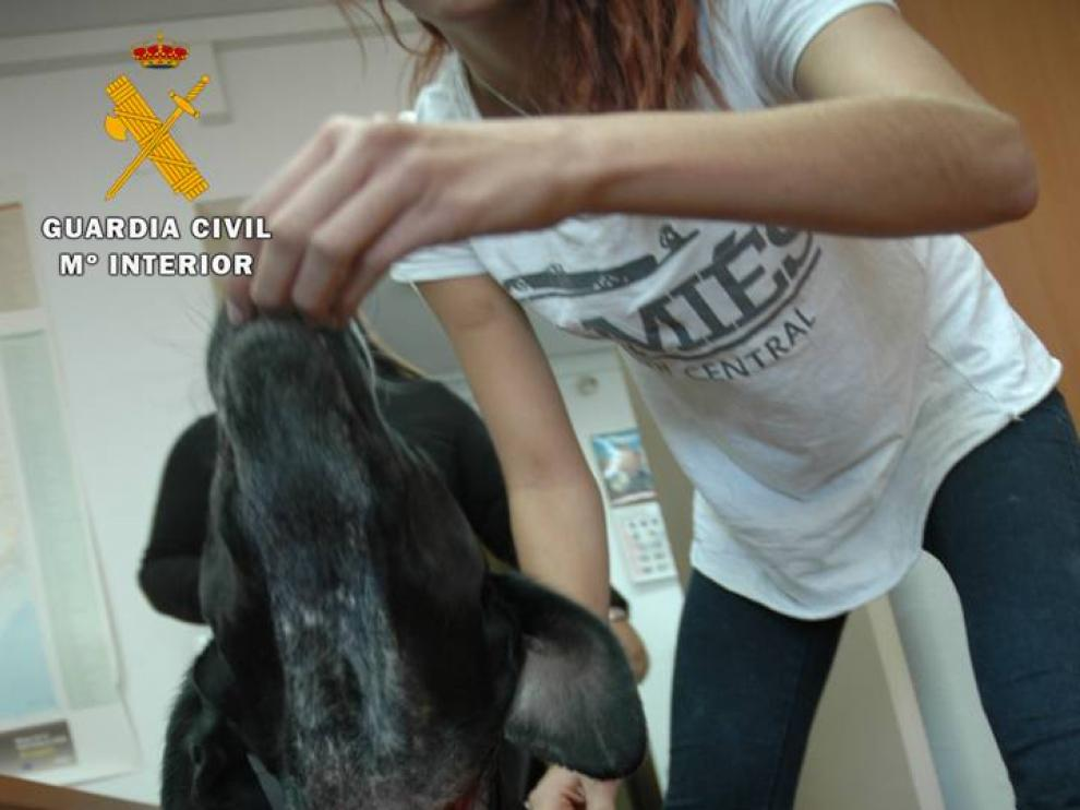 El perro presentaba una herida en el cuello