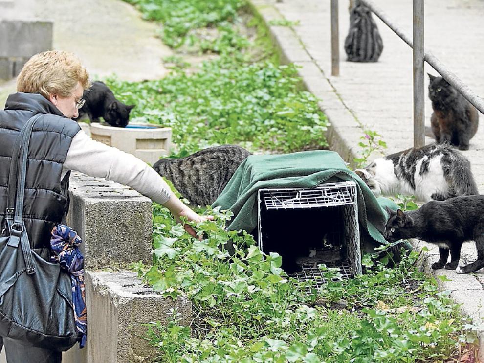Una voluntaria de Proyecto Gato, en el barrio de San Julián.