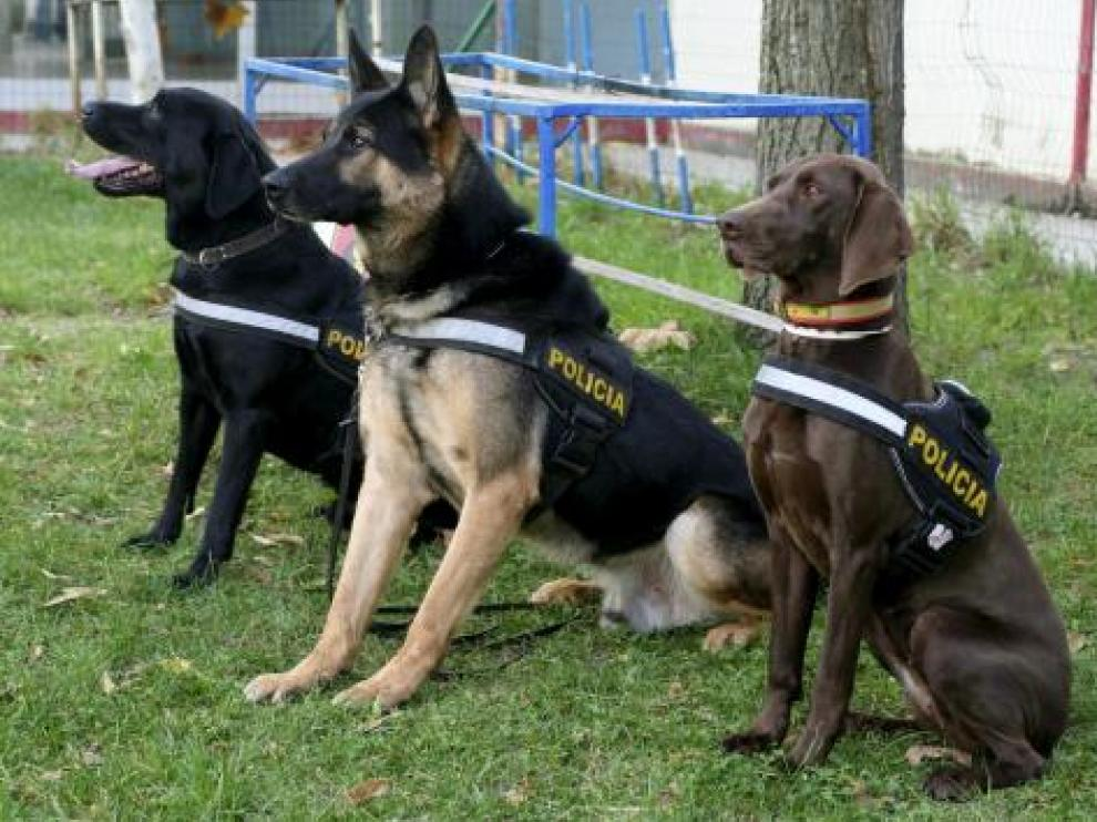 Imagen de archivo de perros policía.