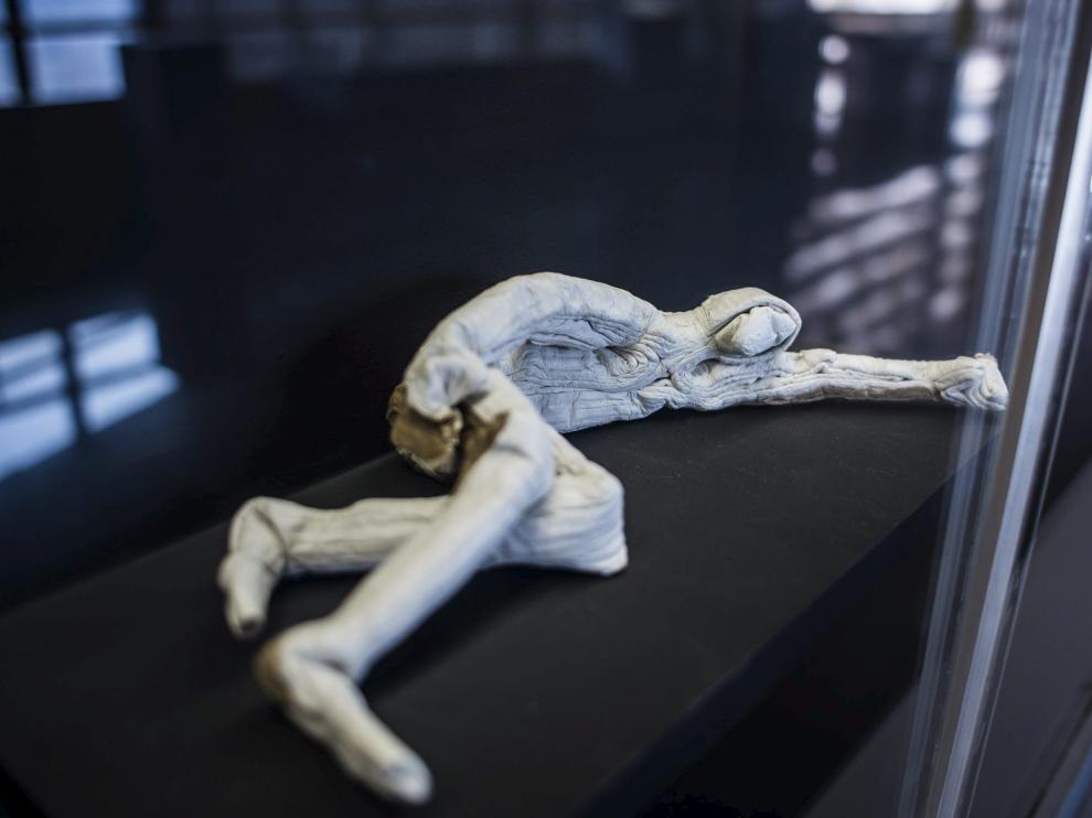 Exposición de Junior Jacquet en el Museo del Origami