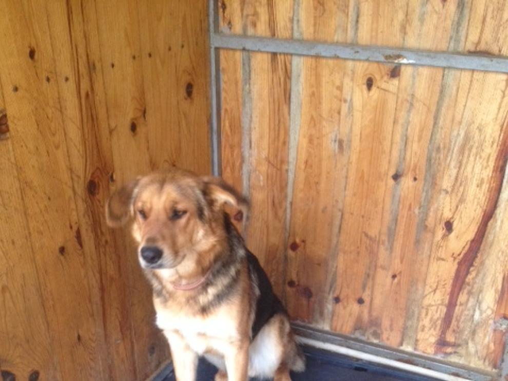 En la imagen, Tauste, uno de los perros que busca dueño, del Centro de Protección Animal