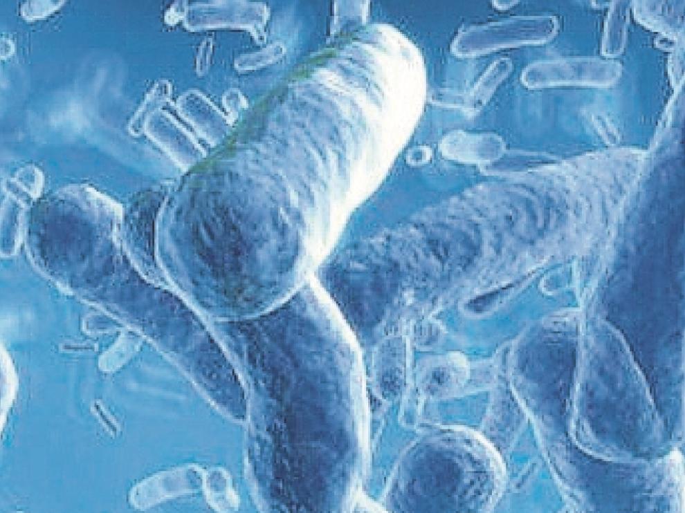 Aragón registra cien casos de tosferina en un año, ocho veces más de lo esperado