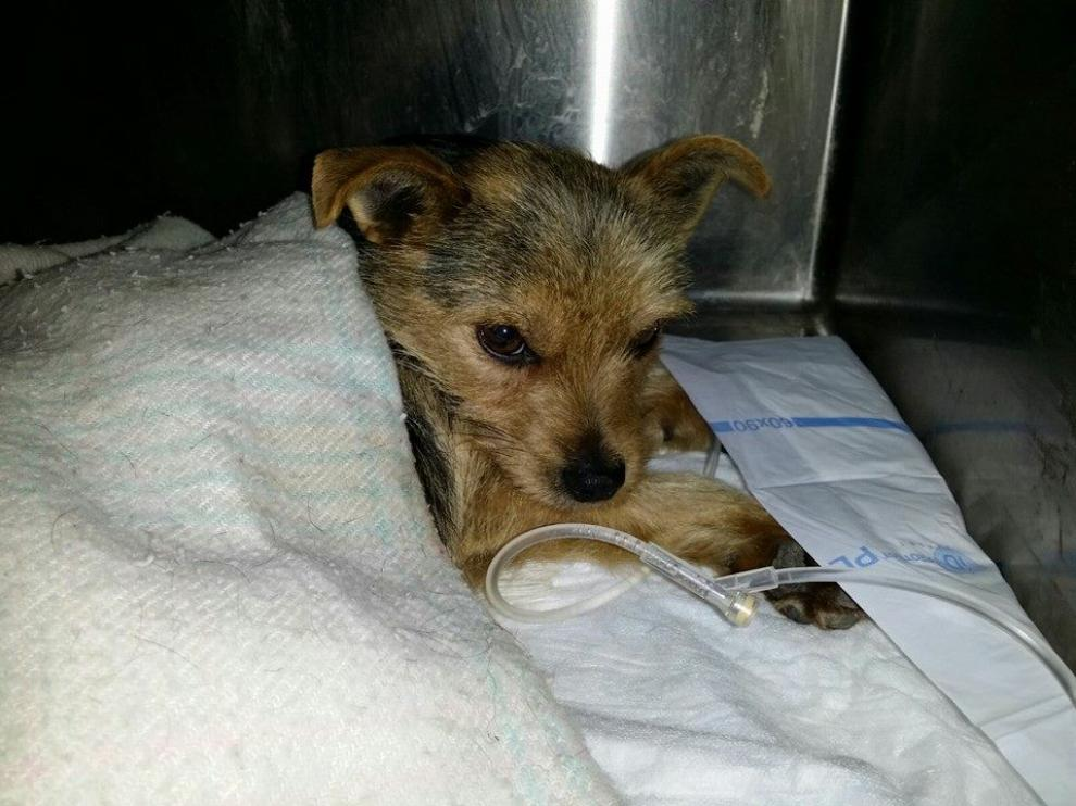 Pipo continúa ingresado en la clínica veterinaria