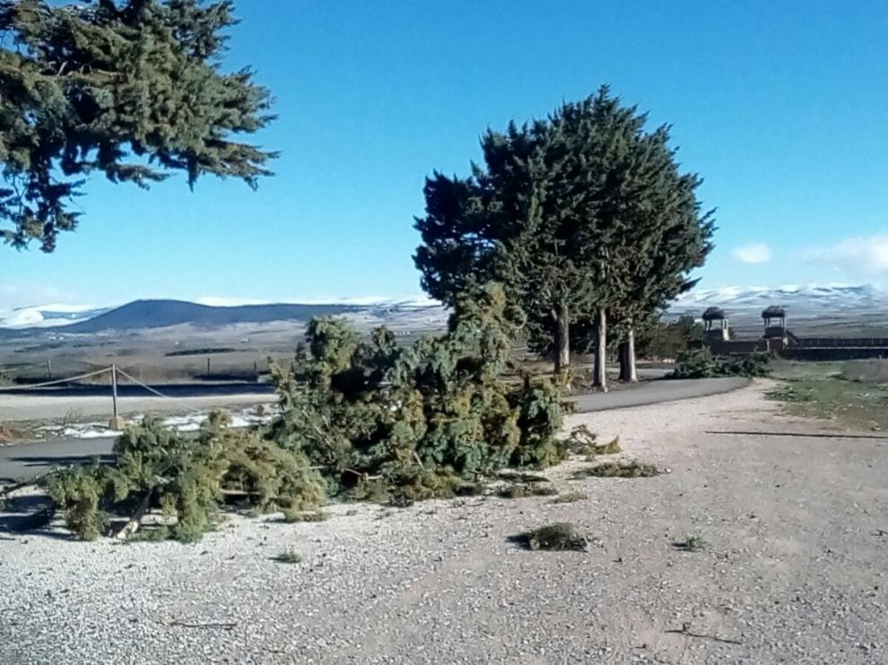 Algunas de las ramas caidas en el acceso interior del Yacimiento de Numancia