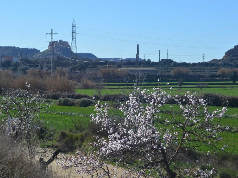 Terrenos donde se va a instalar la planta y, al fondo, el casco urbano de Monzón?.