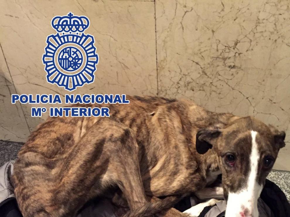 La perra fue encontrada  malherida y malnutrida.