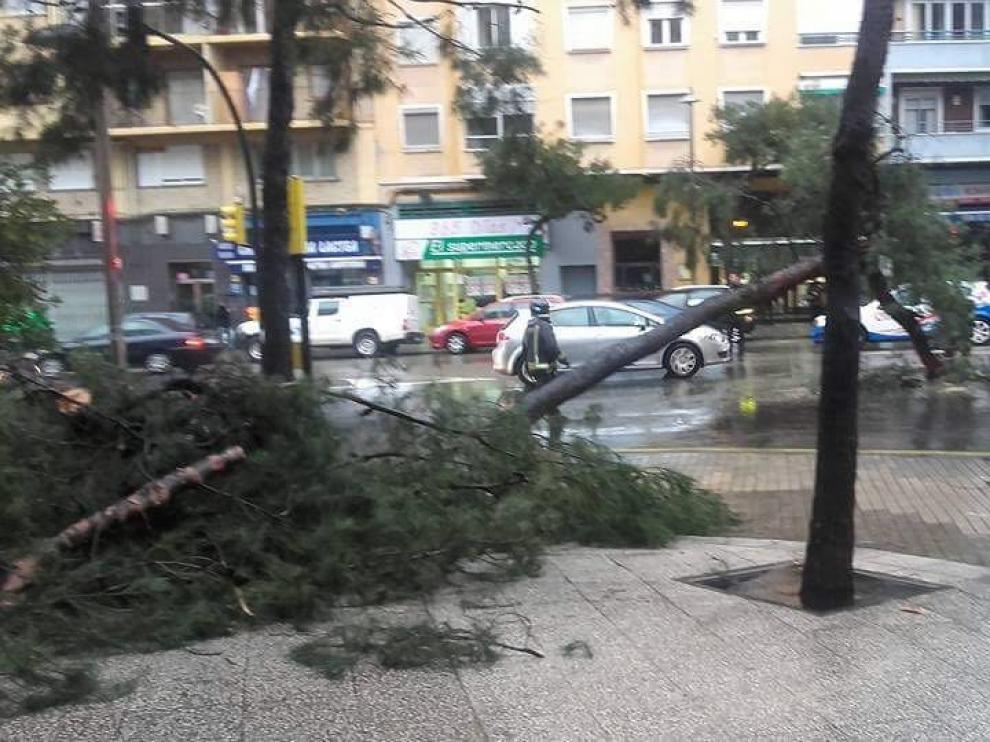 Árbol caído en la calle de Rioja con Julián Sanz Ibáñez
