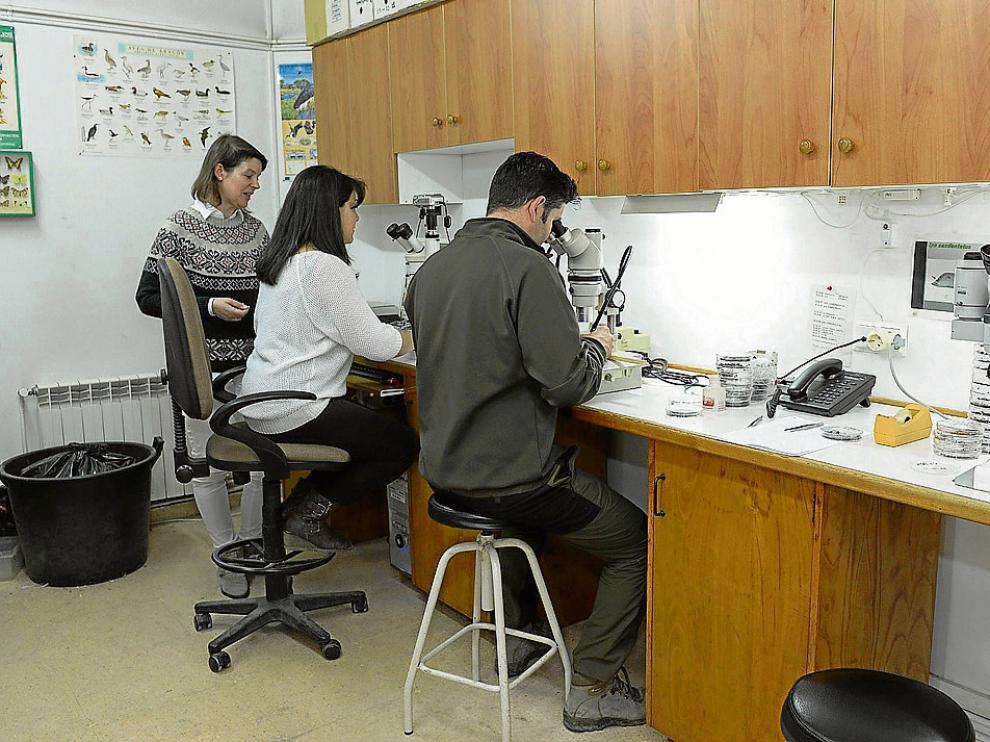 La responsable del laboratorio, al fondo, con técnicos del centro ante los microscopios.