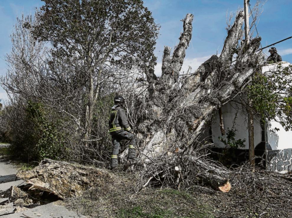 Los bomberos talaron el árbol histórico en Montañana que cayó sobre la red y una casa.