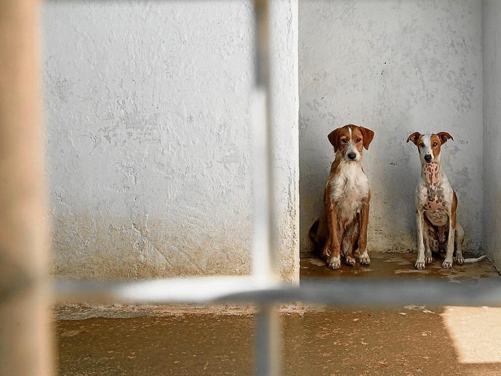 Dos perros, en una de las jaulas del centro de protección animal de Peñaflor.
