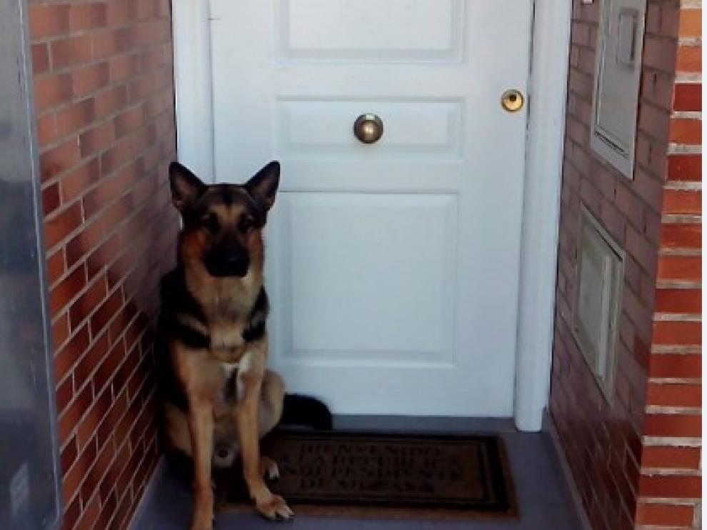 El perro que salvó la vida a su dueño en Sobradiel, a la puerta de su casa.