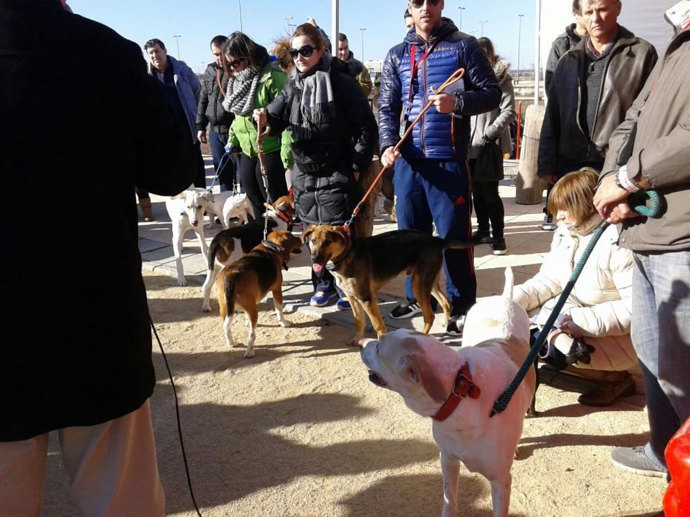 Los barrios del sur de Zaragoza piden espacios para sus perros