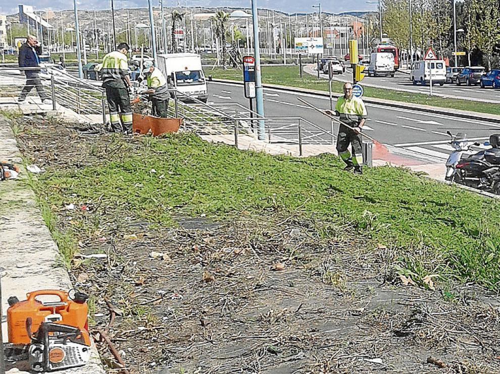 Los operarios municipales arrancaban ayer las plantas autóctonas de la avenida de José Atarés.