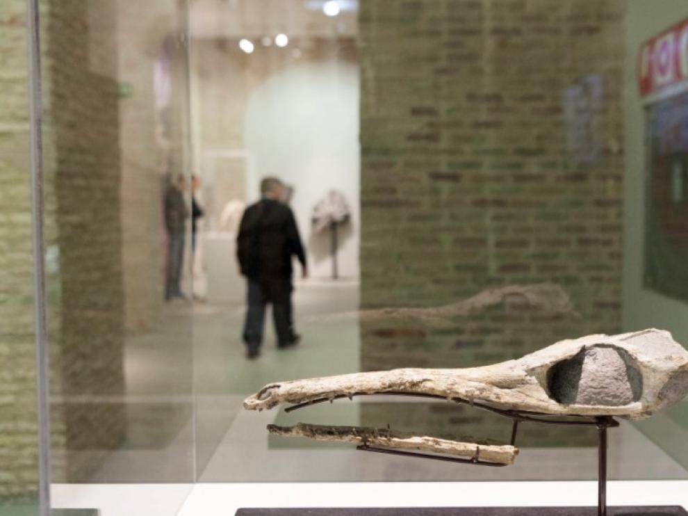 Maledictosuchus riclaensis. Jurásico Medio. Hace 165 millones de años