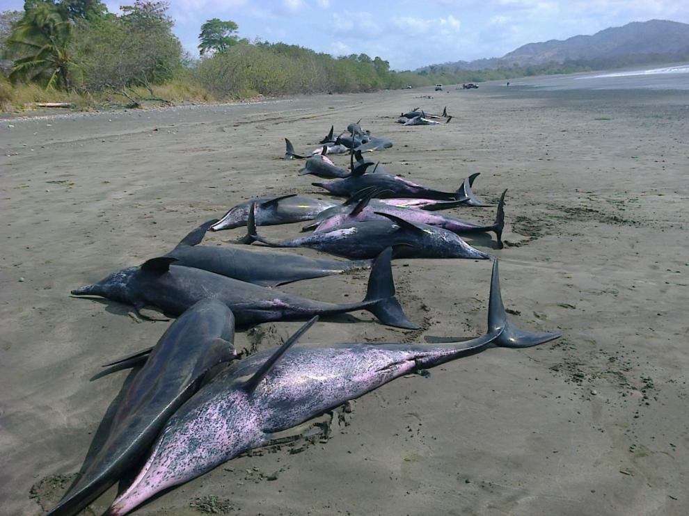 Aparecieron en la Playa Ostonal, en el distrito de Tonosí