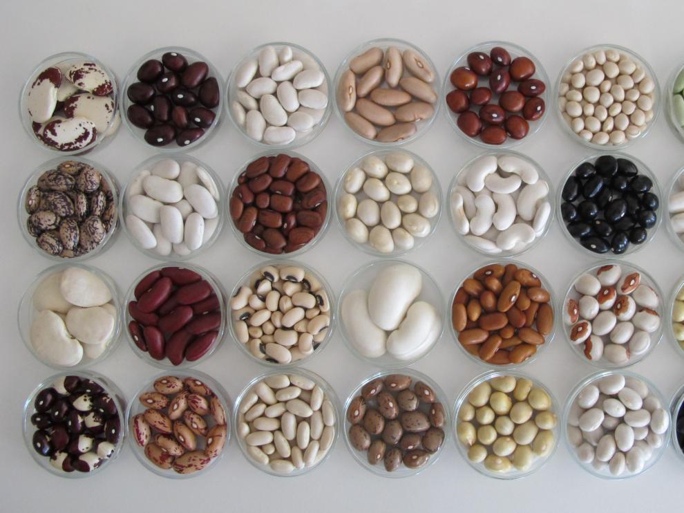 El debate sobre el uso de semillas bajo patente sigue vivo en Aragón