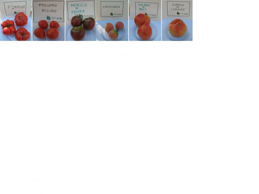 Diversas variedades de tomates aragoneses.
