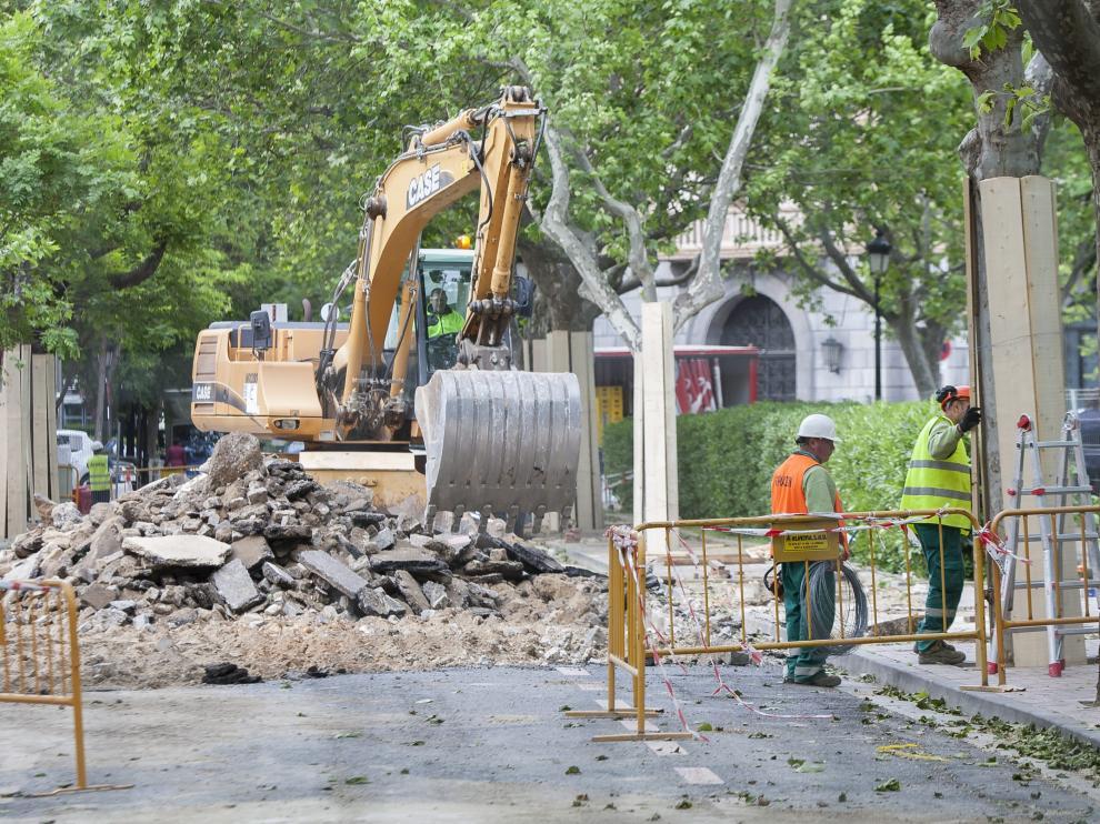 Trabajos de protección de los árboles que siguen en pie.