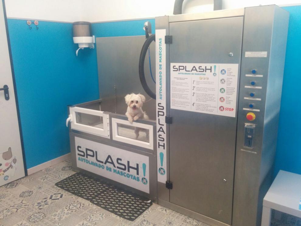 Zaragoza se suma al auto-lavado para mascotas