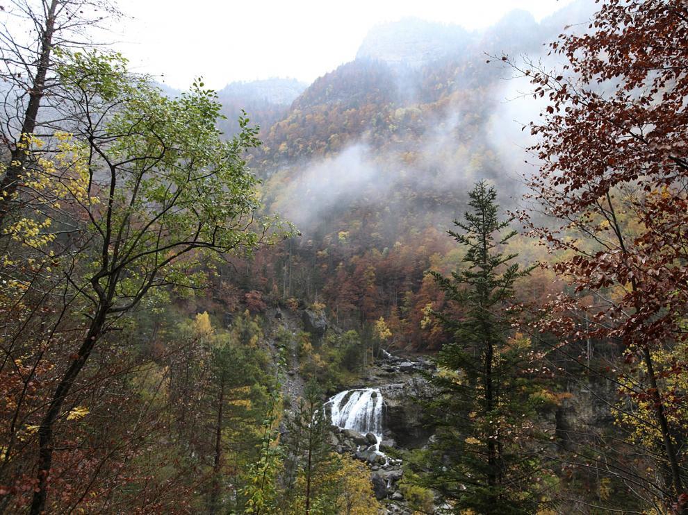 Un bosque, en el Parque Nacional de Ordesa.