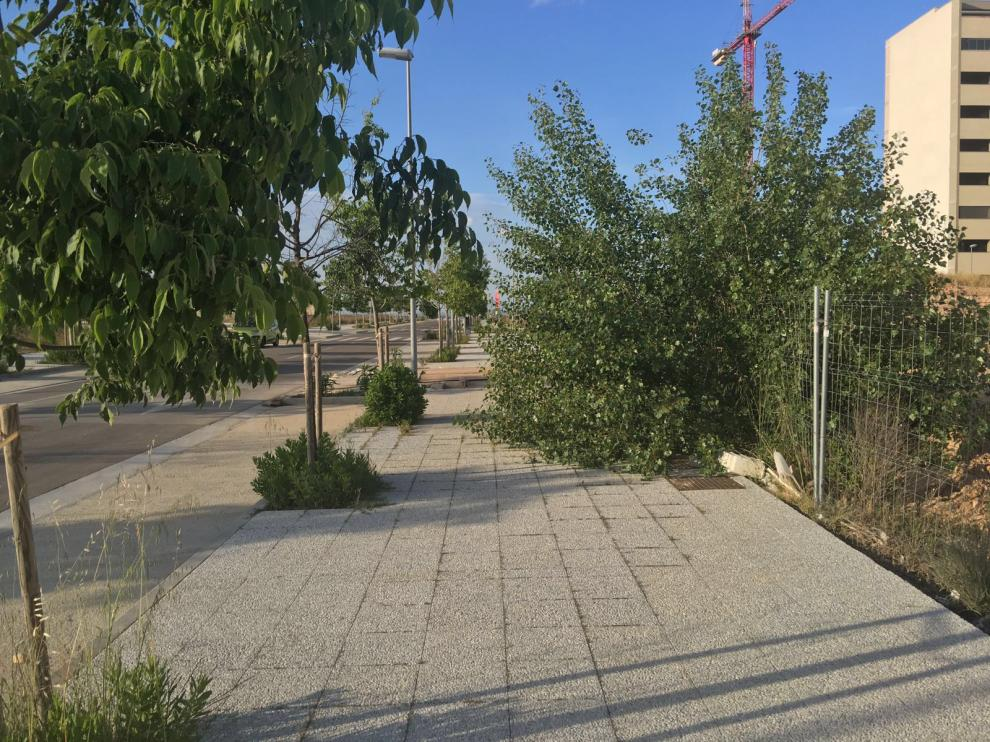 Los vecinos de Parque Venecia critican la falta de mantenimiento de las zonas verdes del barrio.