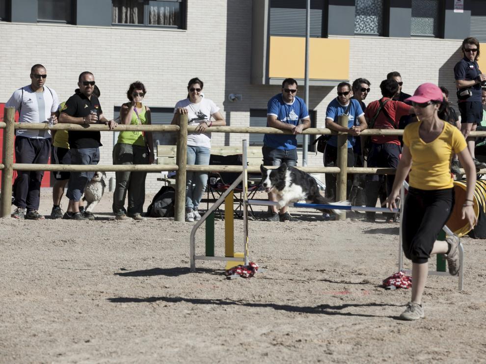 El Ayuntamiento inauguró en 2014 el parque canino más grande de Aragón con una competición de 'agility' (en la imagen). Es una zona de recreo y esparcimiento para perros que pretendía concienciar a los dueños de la necesidad de censar a sus animales.