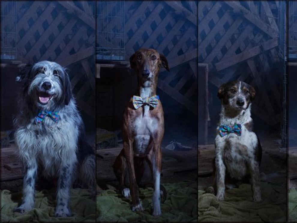 Los cuatro perros protagonistas de 'Cuando Lucas encontró a Eva'.
