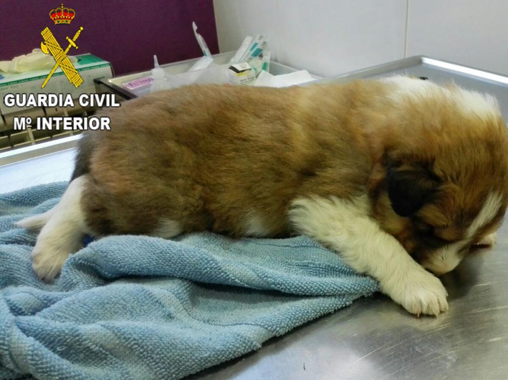 Uno de los cachorros rescatados.