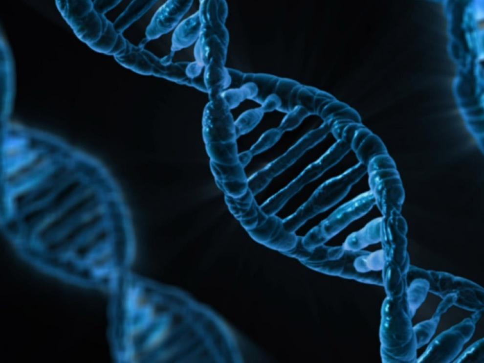 Interrumpir el ciclo de estos genes puede provocar envejecimiento