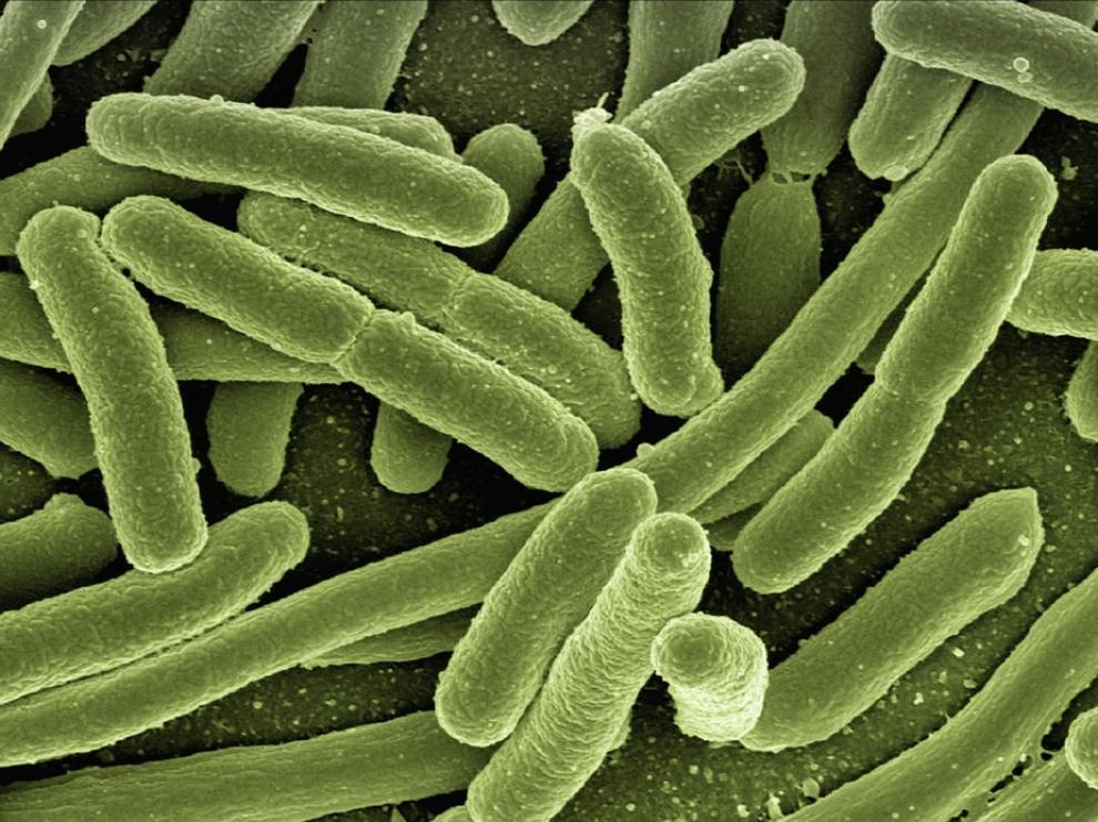 Las superbacterias son una de las principales amenazas a la salud humana.