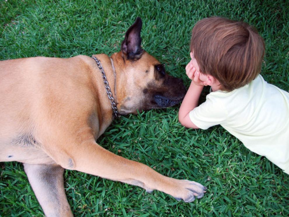 A Coco, una hembra de Bullmastiff de seis años, se le extirpó hace cuatro años un tumor en el ovario y recibió cuatro sesiones de quimioterapia en el Hospital Clínico Veterinario de la UAX.