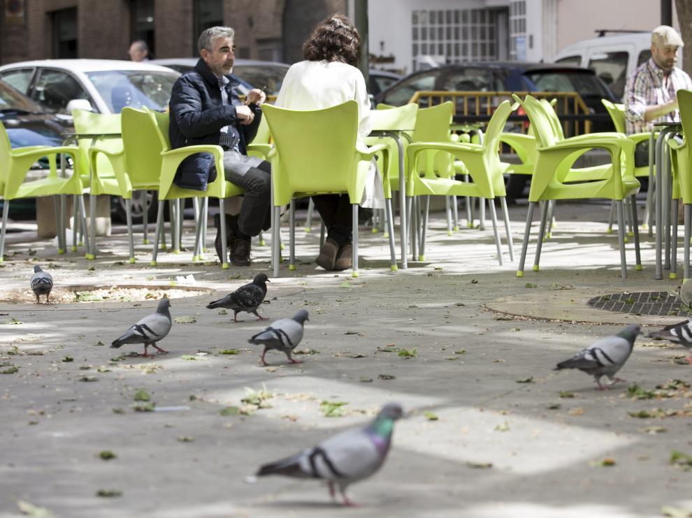 Las palomas, esas compañeras de parque y terraza.