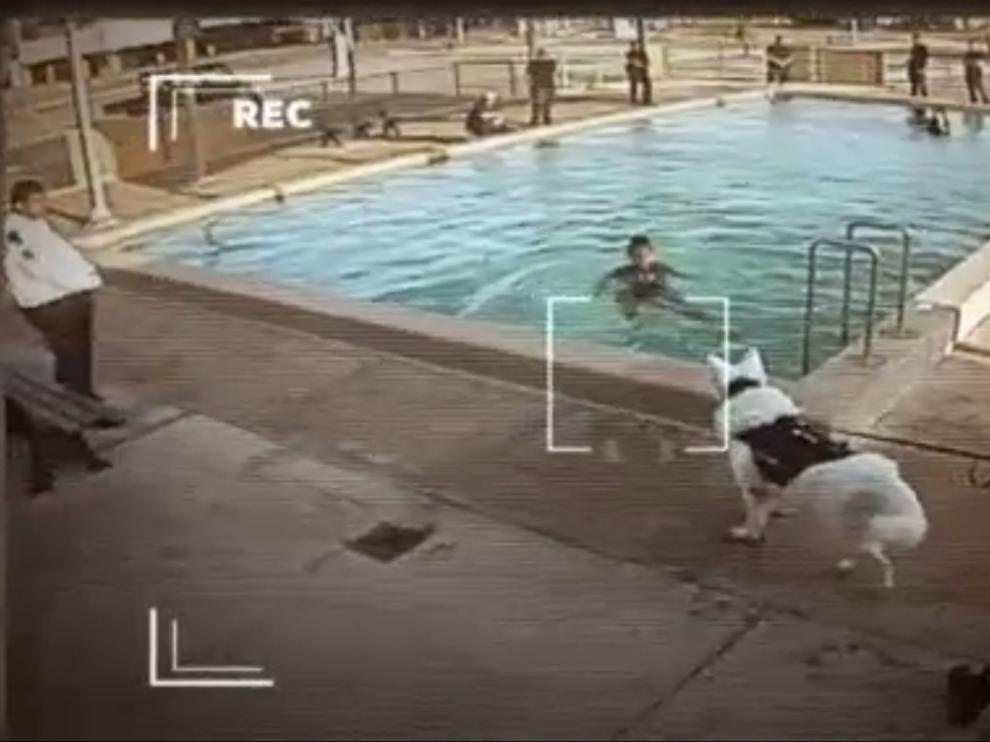 Imagen difundida por la televisión australiana de un menor que no puede salir del agua porque hay un perro amenzante