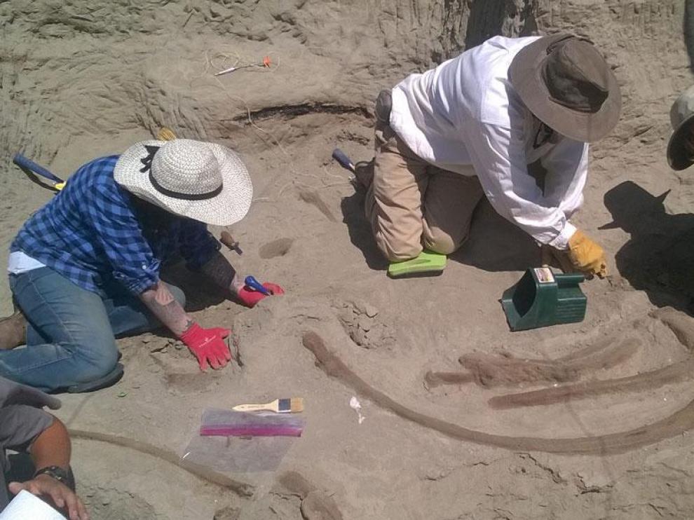 Algunos paleontólogos trabajan en el esqueleto hallado