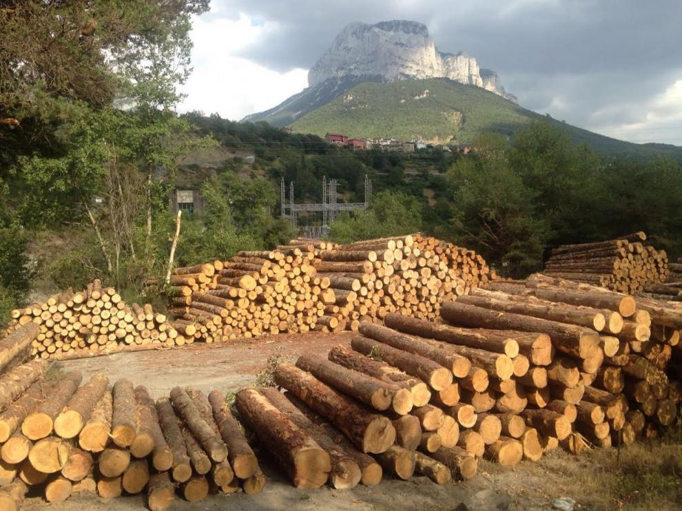 Una imagen de la tala en Laspuña.