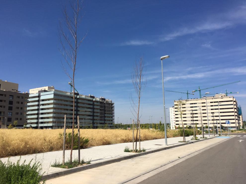 Estado de los árboles de la calle La Vogalonga.