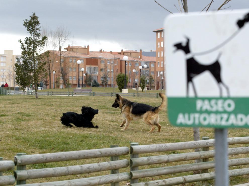 Dos perros juegan en uno de los parques de la capital.