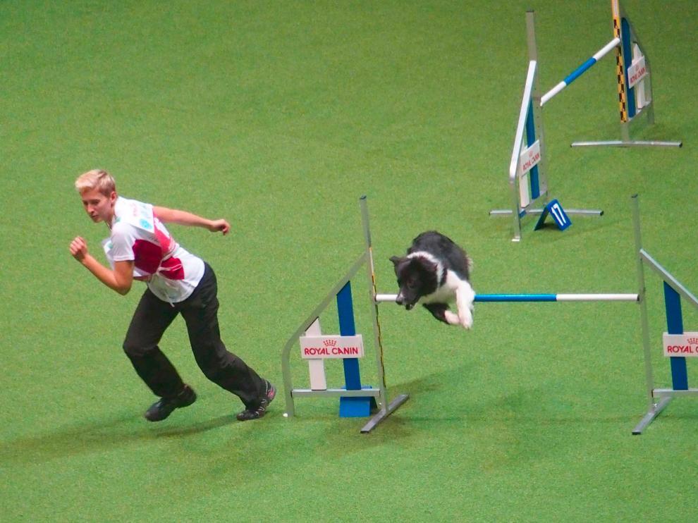 Incrementar la actividad física de las mascotas puede resolver problemas de conducta.