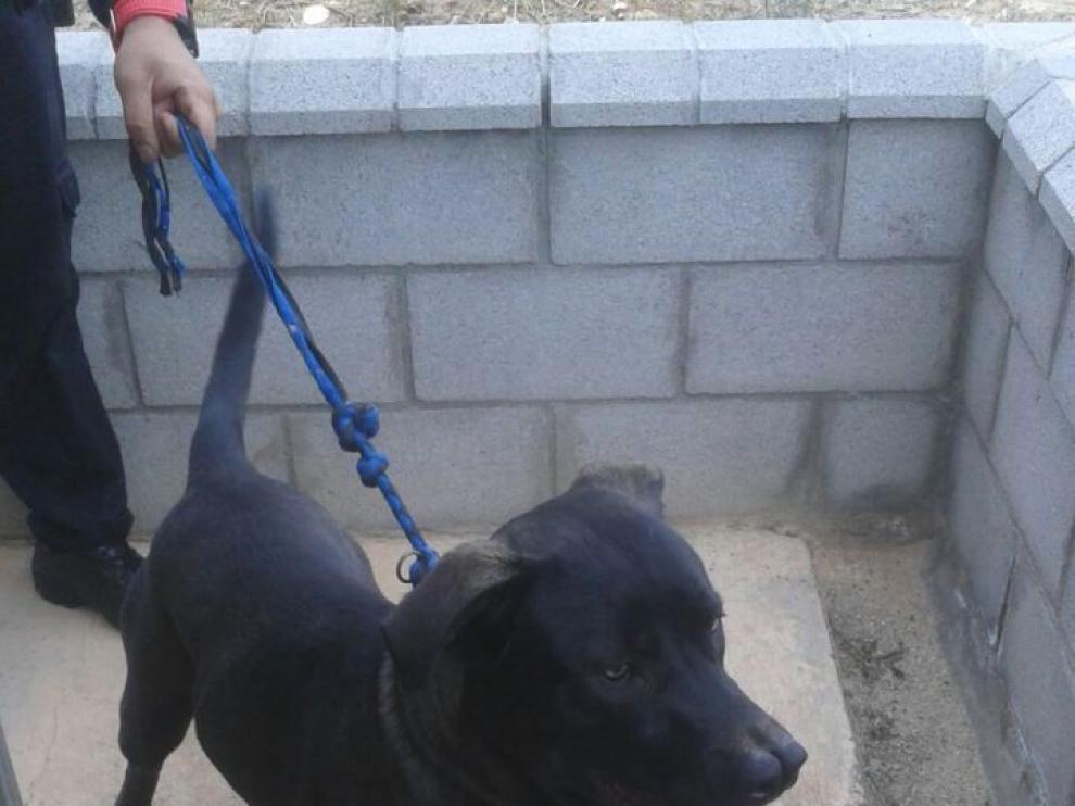 Pachi tiene un año y es uno de los 22 perros que esperan su adopción.
