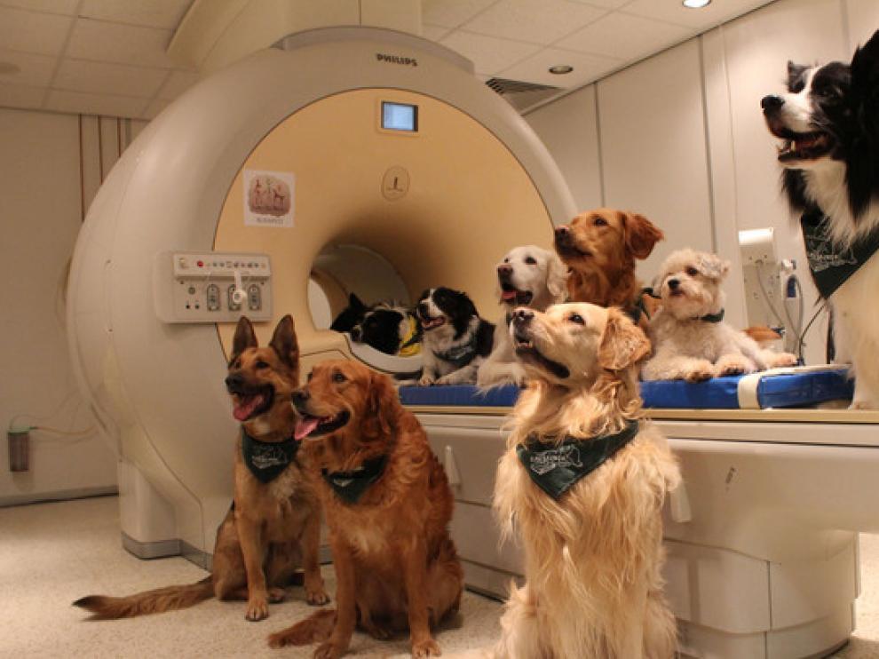 Los 13 perros entrenados a lo que se le realizó una resonancia magnética para el estudio.